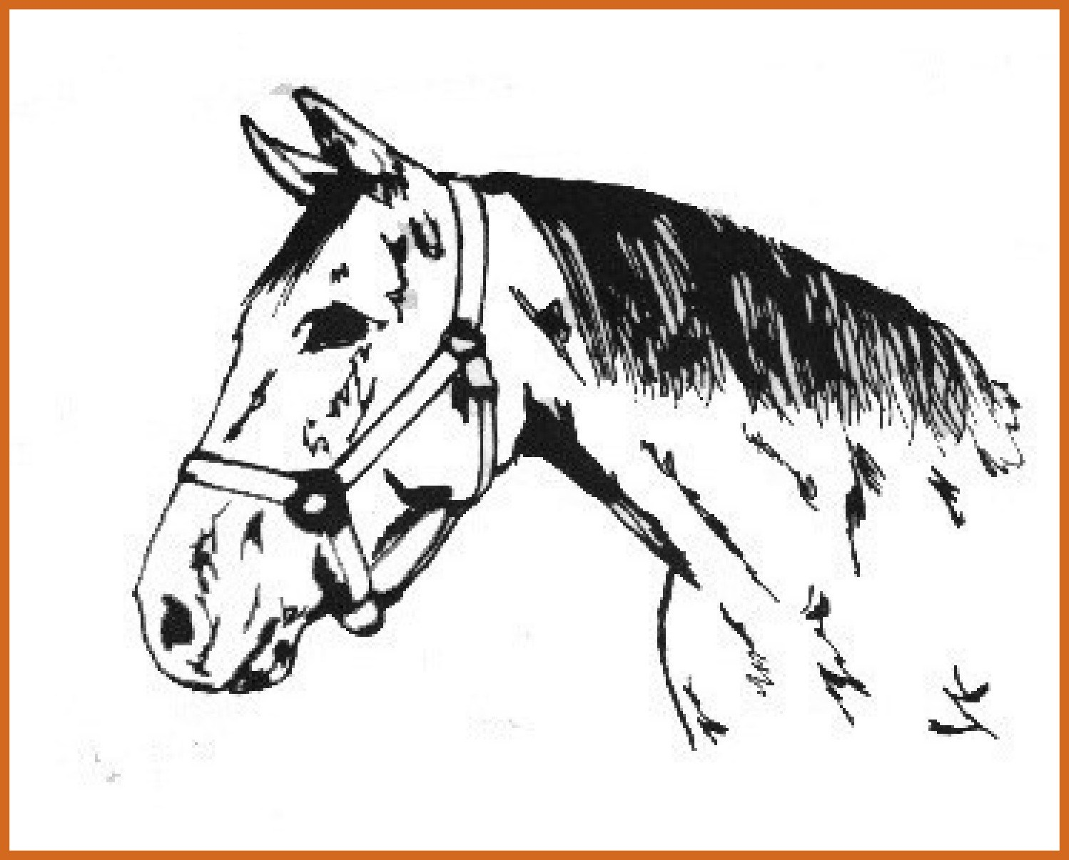 1498x1206 Marvelous Quarter Horse Coloring Pages Picture For Running Style