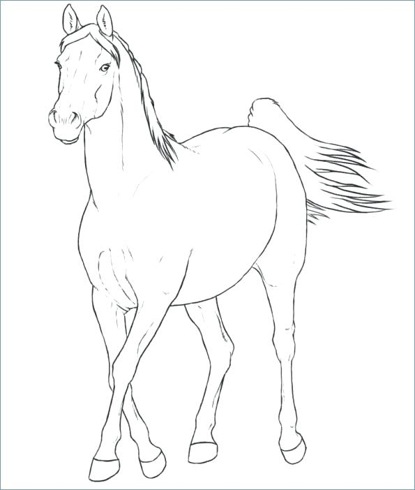 595x702 Horse Head Profile Coloring Page Horse Head Coloring Pages