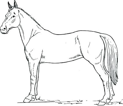 425x368 Coloring Page Of A Horse Quarter Horse Coloring Pages Horse