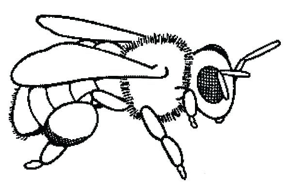 600x385 Beehive Coloring Page Honey Bee Coloring Pages Honey Bee Coloring