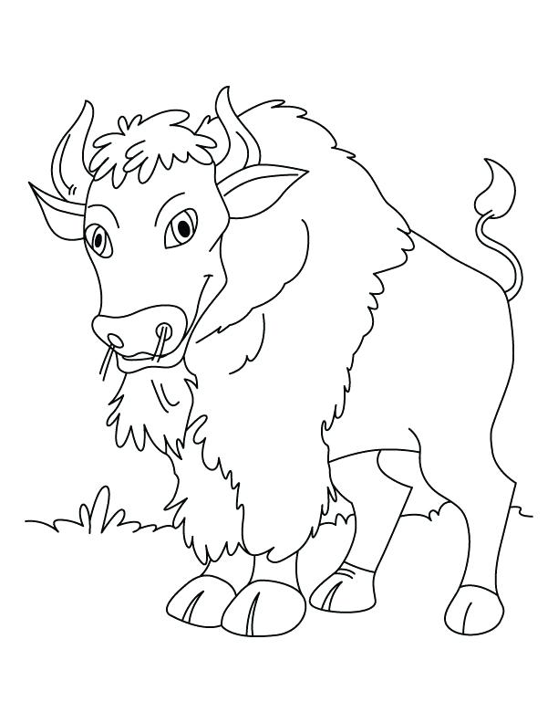 612x792 Calm N Quiet Bison Coloring Pages Download Free Calm N Quiet Calm