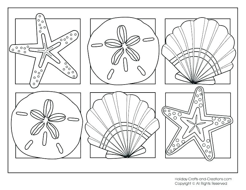 800x618 Sea Shell Coloring Page Quill Pencil Coloring Page Sea Shell