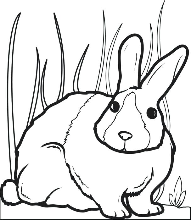 607x700 Free Rabbit Coloring Pages Printable Bunny Rabbit Coloring Page