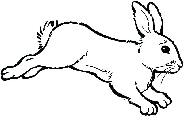 600x383 Easter Bunny Coloring Pages For Adults Bunny Rabbit Coloring Pages