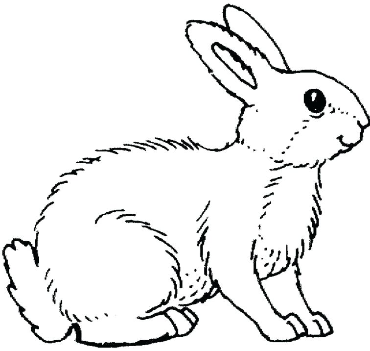 756x716 Rabbit Coloring Pages Astonishing