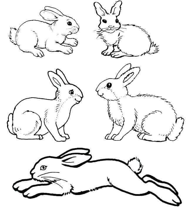 650x706 Rabbit Colouring Pages Rabbit Coloring Pages Rabbit Color Pages
