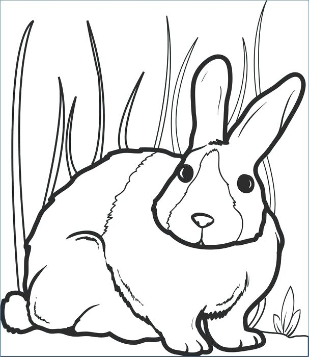 607x700 Printable Bunny Coloring Pages Free Printable Bunny Pictures Bunny