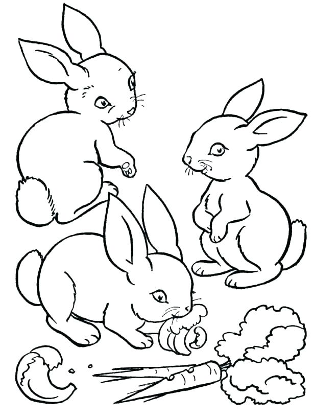 615x820 Bunny Rabbit Coloring Page Bunny Rabbit Coloring Pages Bunny