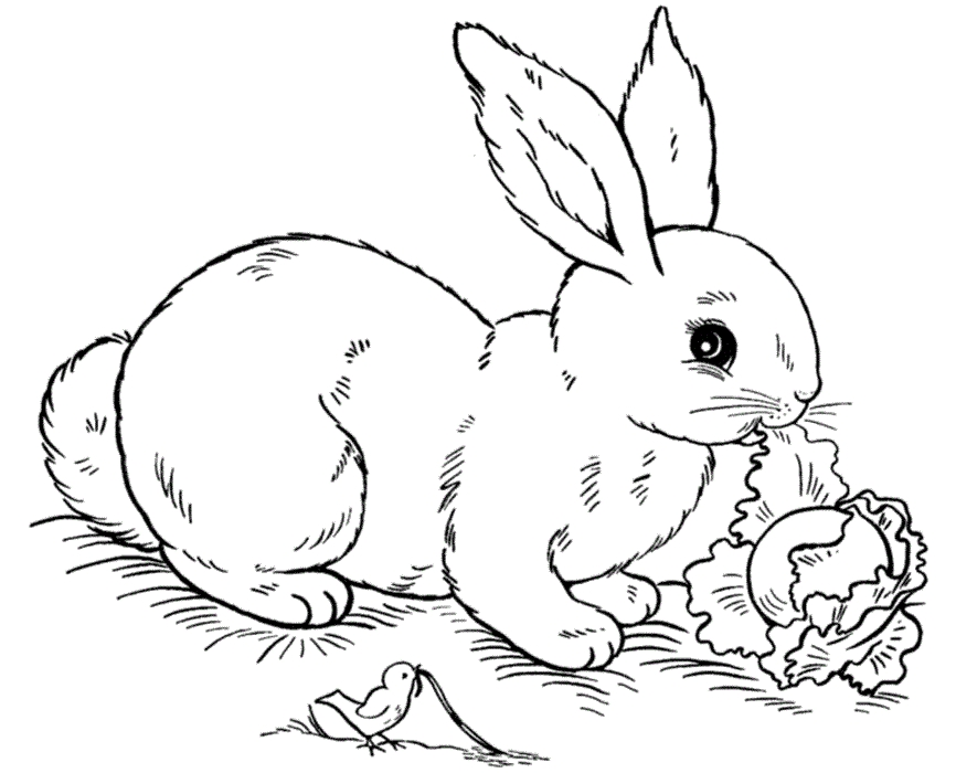 866x700 Bunny Coloring Pages Free Printable Free Coloring Pages