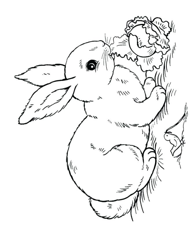 670x820 Rabbit Coloring Pages Free Printable Printable Rabbits Coloring