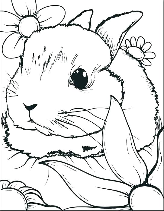 543x700 Bunnies Coloring Pages Top Free Printable Bunny Coloring Pages