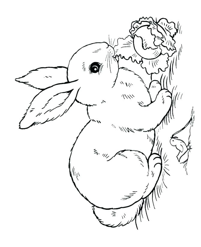 670x820 Coloring Pages Rabbit Entertaining Peter Rabbit Coloring Pages Fee