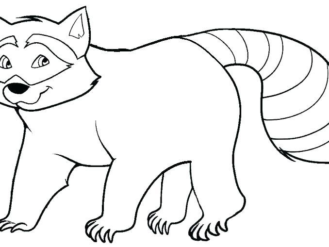 Raccoon Coloring Page at GetDrawings   Free download