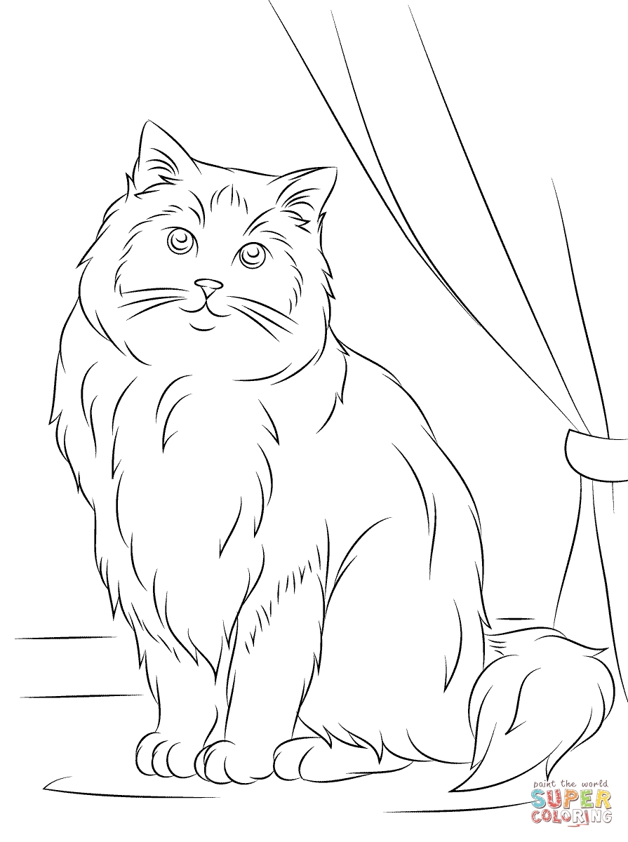 895x1200 Himalayan Cat Coloring Pages Collection Coloring For Kids