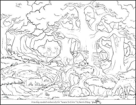 564x437 Rainforest Coloring Sheet Rainforest Frog Coloring Pages