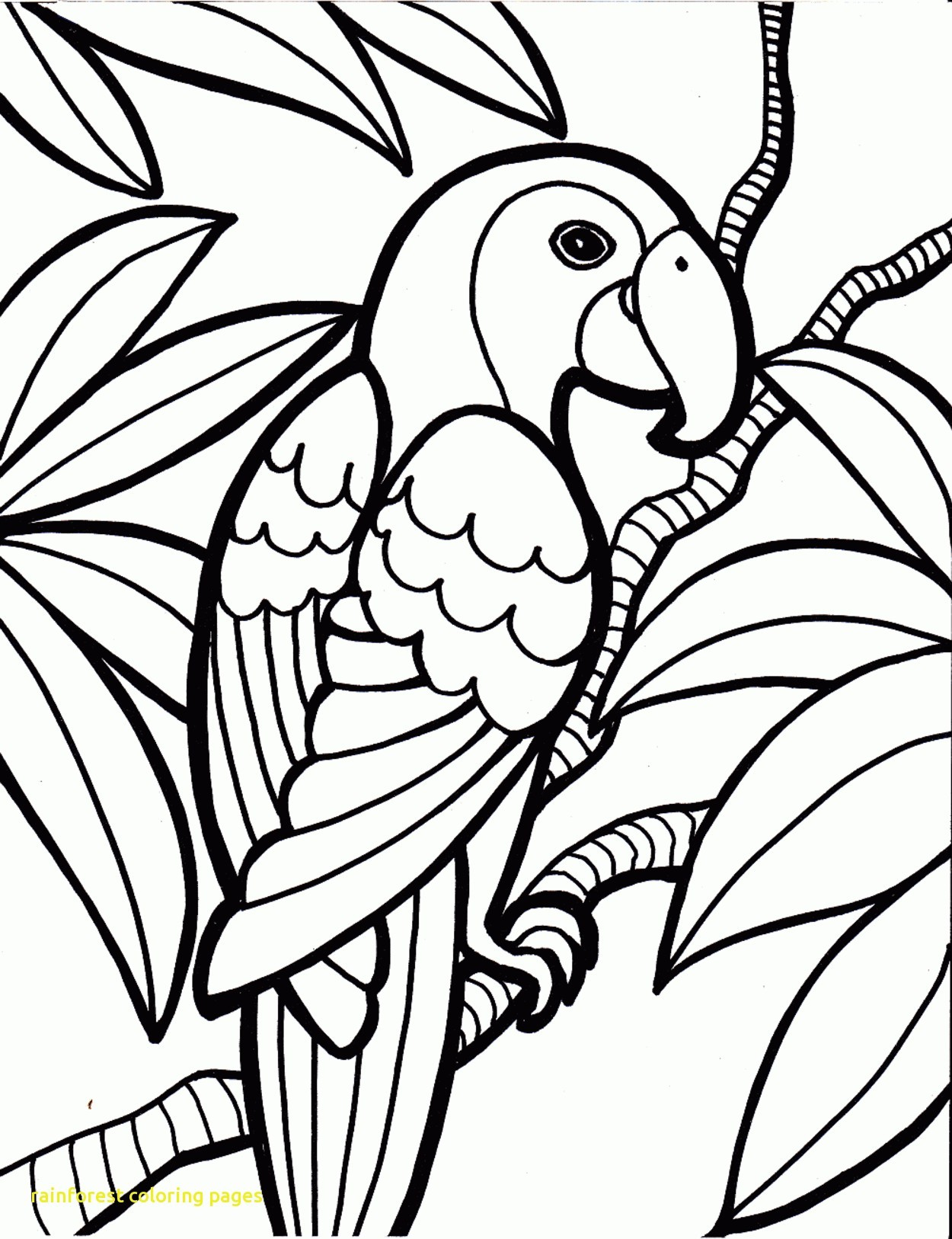 Rain Forest Coloring Pages At Getdrawings Free Download