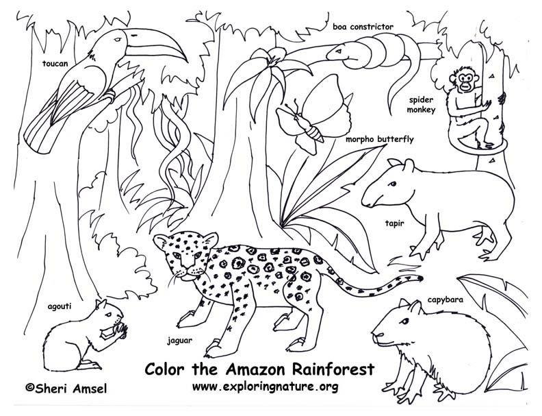 792x607 Rainforest Color Pictures Rainforest