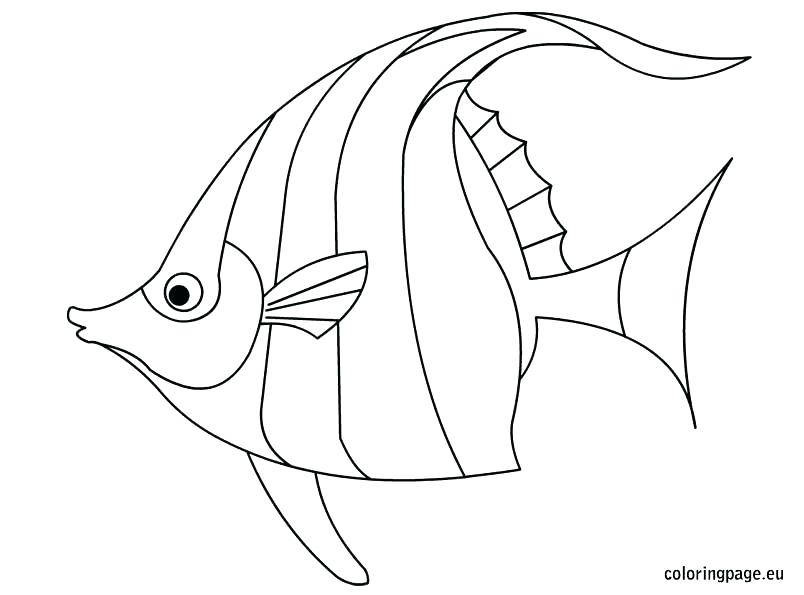 804x595 Rainbow Fish Coloring Page Pdf Color Tropical Book Pages