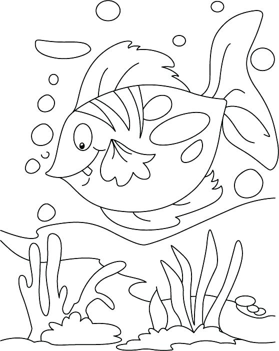 558x702 Rainbow Fish Coloring Page Photograph Fish Coloring Pages Floating
