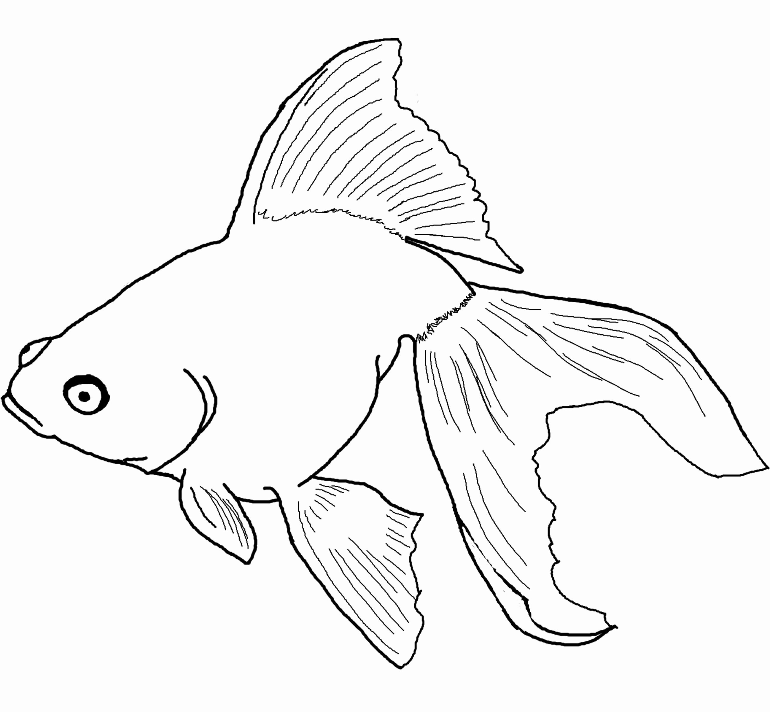 2596x2400 Rainbow Trout Coloring Pages Fish Coloring Pages For Kids