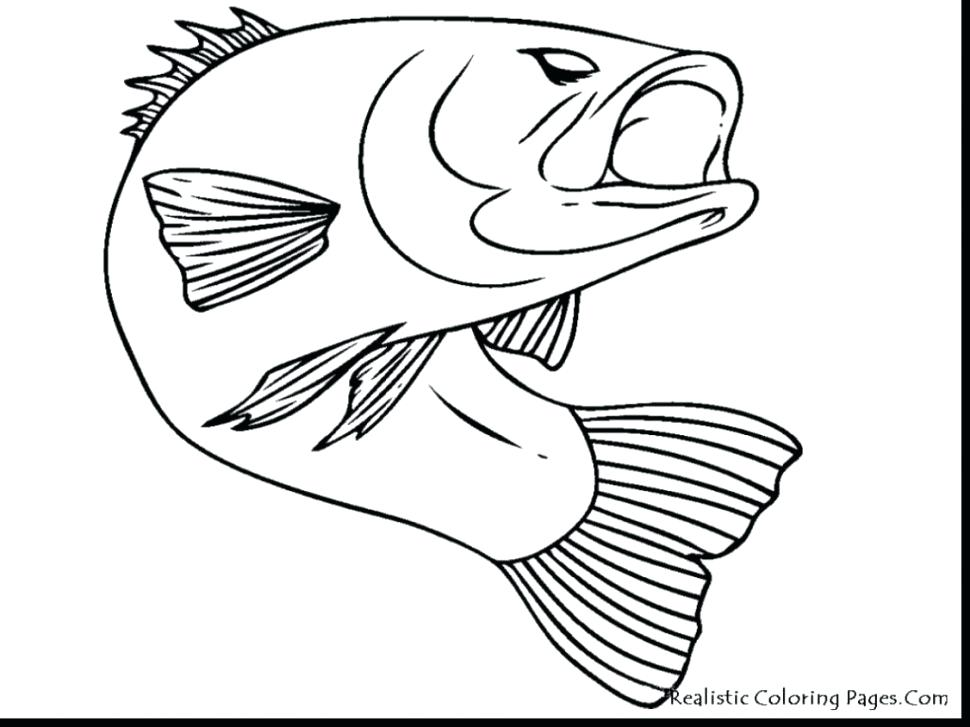 970x727 Remarkable Rainbow Trout Coloring Page Fish Fins Fish Scales