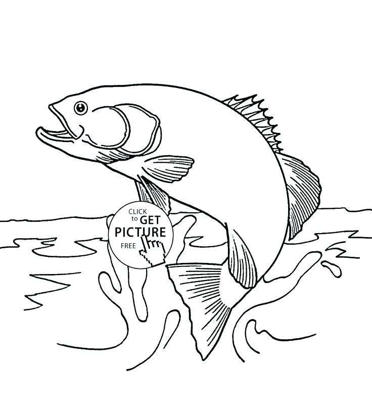 736x811 Trout Coloring Page Rainbow Trout Coloring Page Home Improvement