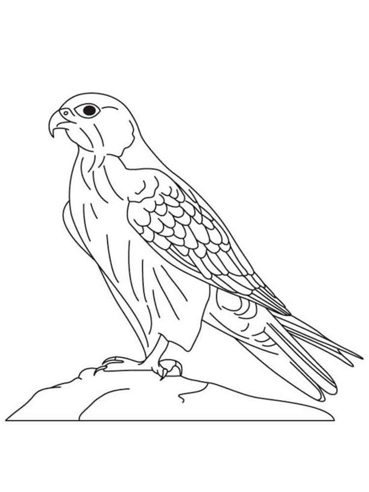 750x1000 Falcons Coloring Pages Download And Print Falcons Coloring Pages