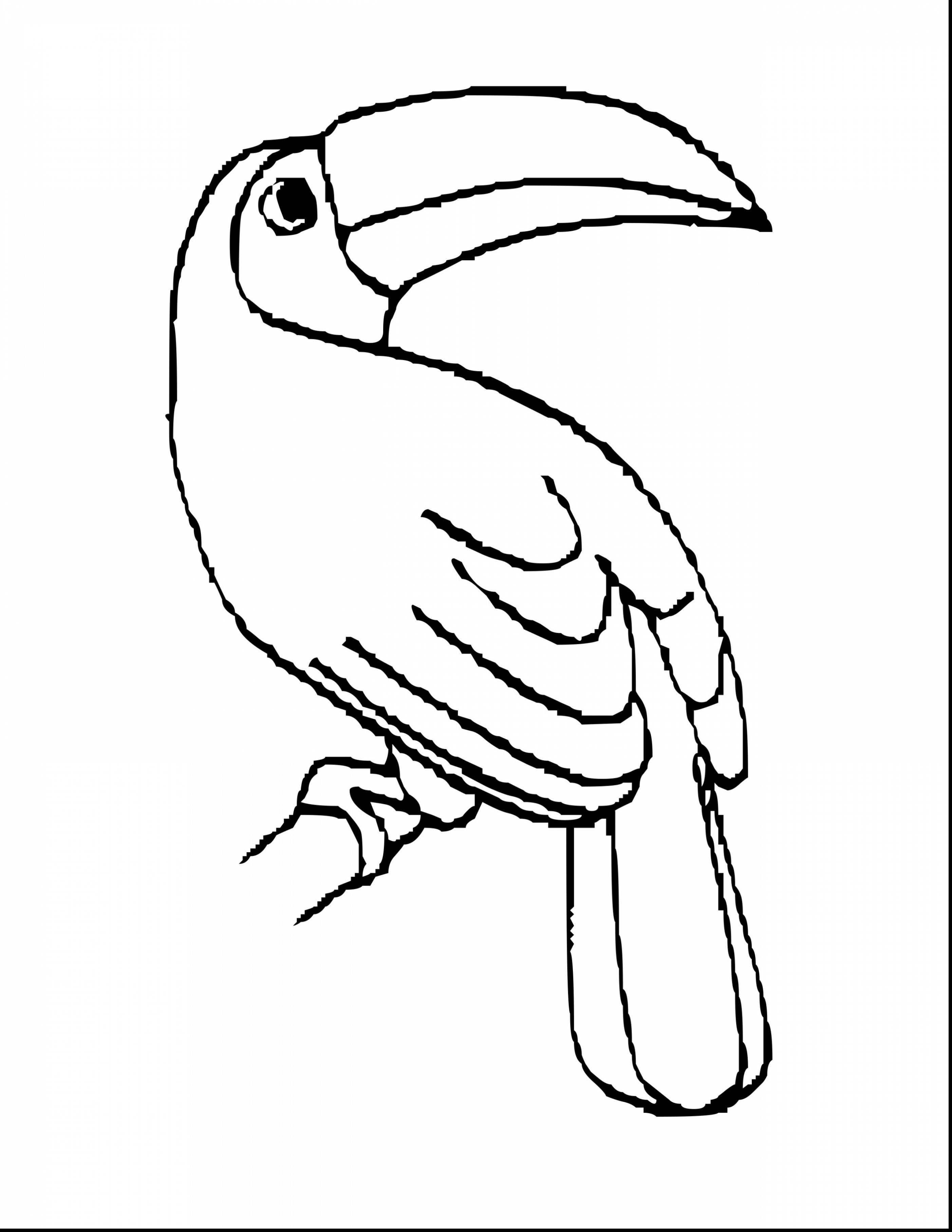2805x3630 Inspiration Coloring Pages Of Birds In The Rainforest