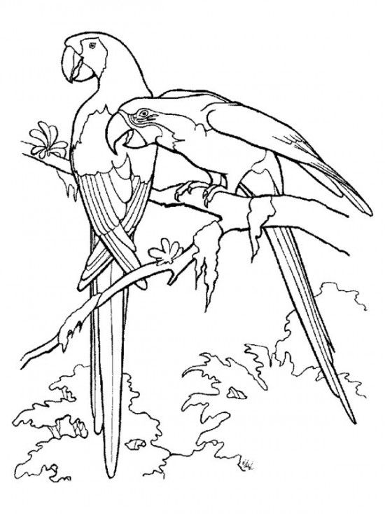 550x733 Rainforest Birds Coloring Pages Picture Painting Art
