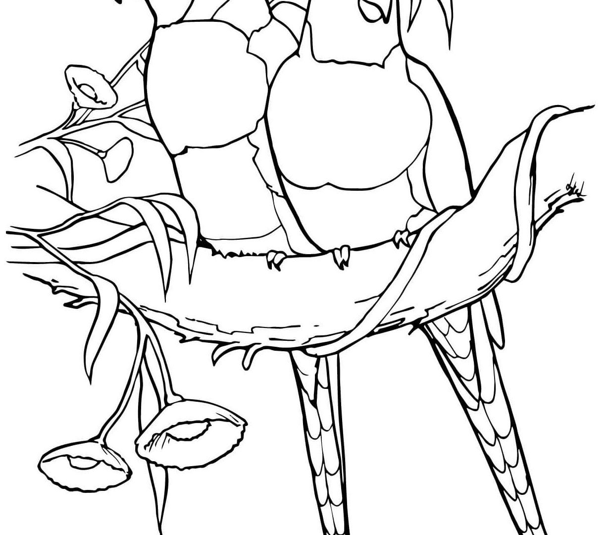 1224x1080 Bird Coloring Page Printable To Pretty Print Printables Pages