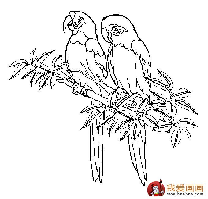 680x653 Tropical Rainforest Birds Coloring Pages