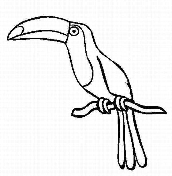 600x612 Rainforest Animal Coloring Pages Coloring Kids