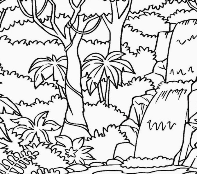 678x600 Printable Rainforest Coloring Pages Rainforest Coloring Pages