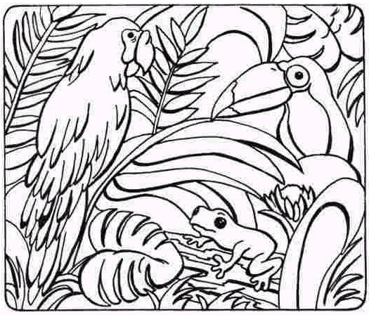 525x451 Rainforest Animal Coloring Pages