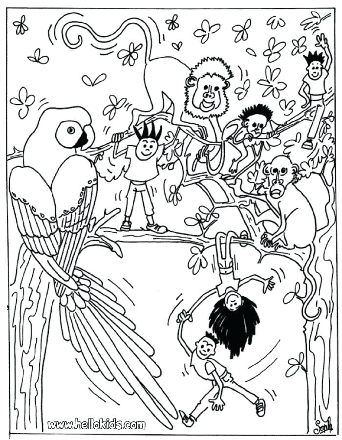 700x900 Rainforest Coloring Page Awesome Tropic Coloring Page Rainforest