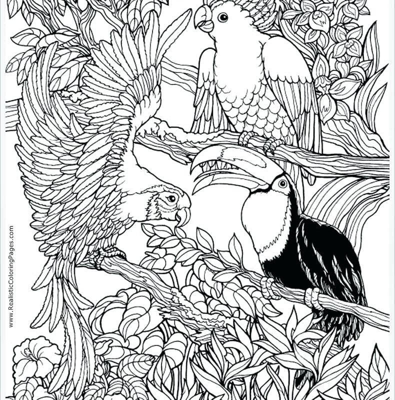790x800 Coloring Pages Animals Parrot Coloring Page To Download Free