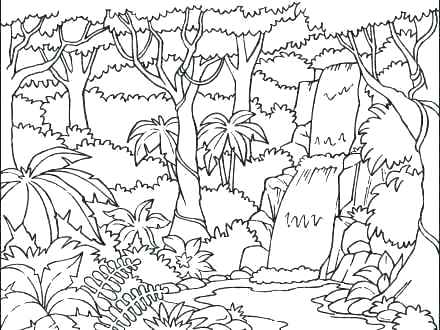 440x330 Tropical Rainforest Coloring Pages Monkey Hanging On Snake