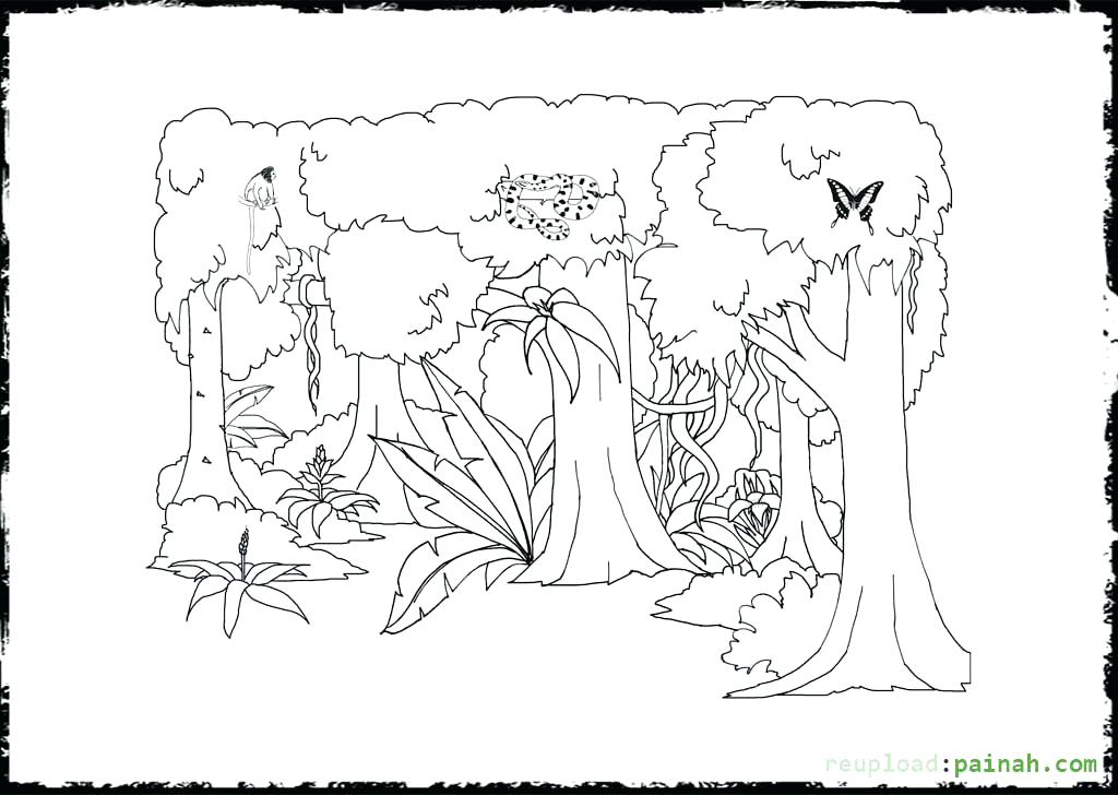 1024x728 Here Are Tropical Rainforest Coloring Pages Images Free Printable