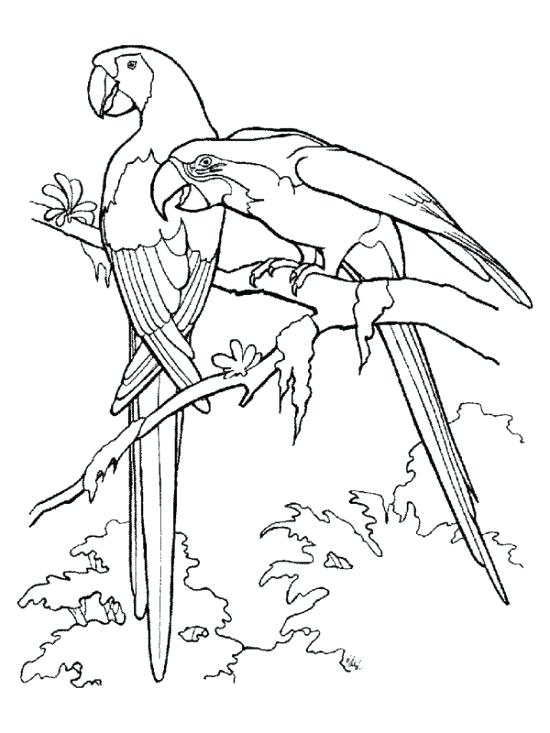 550x733 Rainforest Animal Coloring Pages Printable Animal Coloring Pages