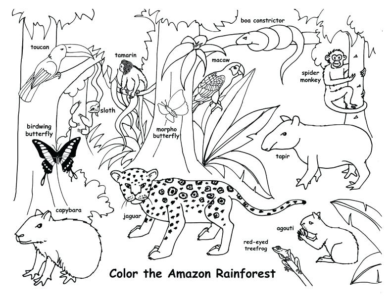 792x612 Rainforest Coloring Page Amazing Animals Coloring Page Rainforest