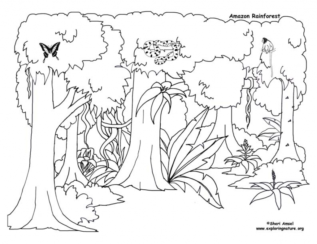 1024x790 Bargain Tropical Rainforest Coloring Page Pages New To Print