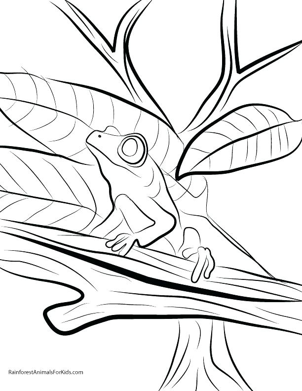 612x792 Rainforest Coloring Page Coloring Pages To Print Red Eyed Tree