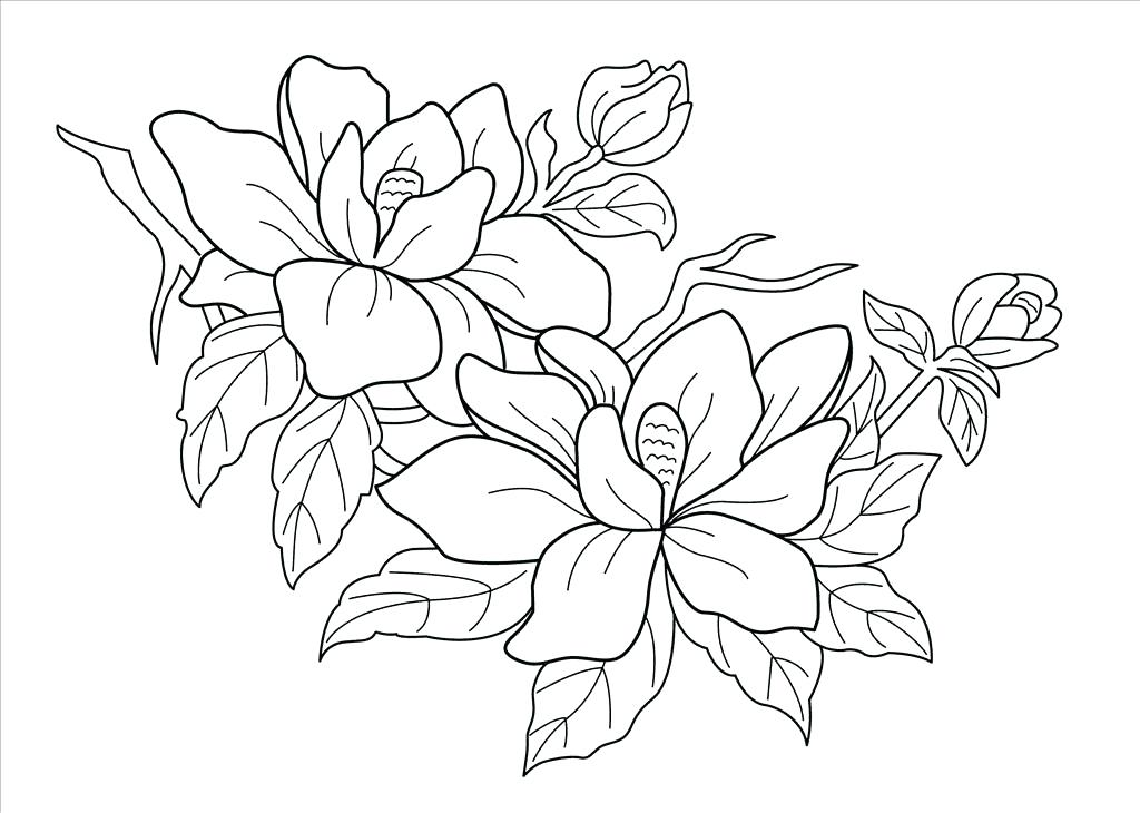 1024x730 Rainforest Coloring Pages Free Coloring Pages Free Coloring Pages