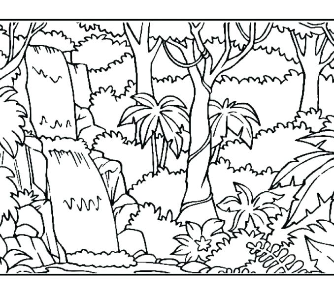 678x600 Rainforest Coloring Pages To Print Printable Coloring Pages