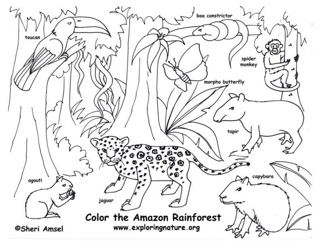 1024x785 Tapir Colorings Colouring For Kids Imposing Malayan And Friends