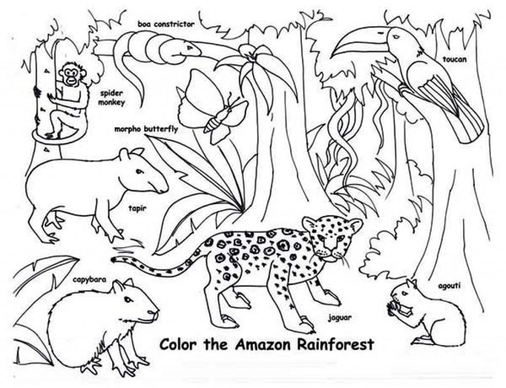 1024x785 Tropical Rainforest Coloring Page