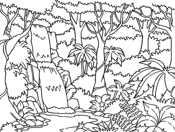 600x453 Enchanting Rainforest Coloring Page Coloring Pages Printable Rain