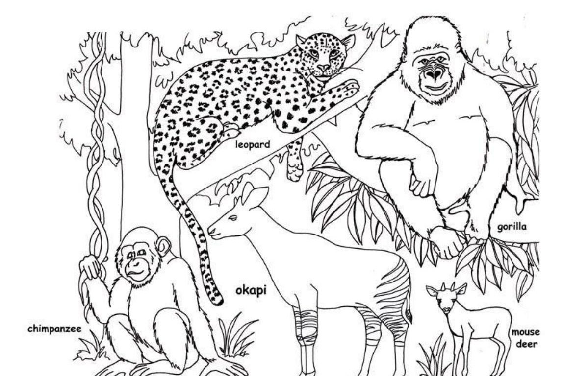 1148x768 Free Printable Rainforest Animals Coloring To Color And Print