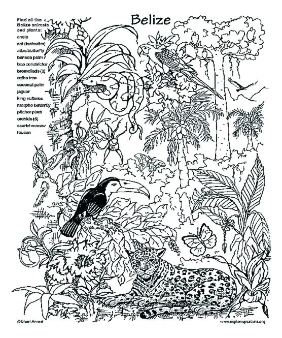 556x665 Rainforest Animal Coloring Pages Coloring Pages Adult Coloring