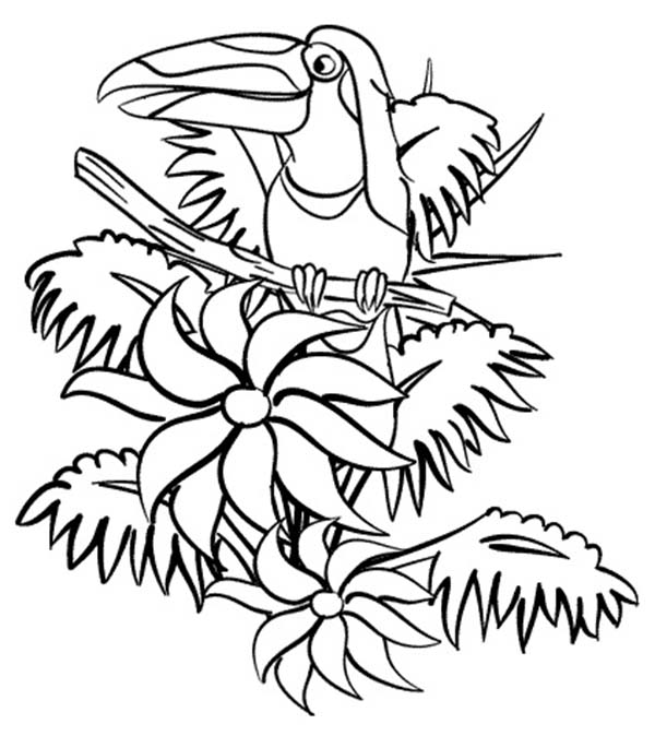 600x674 Beautiful Hornbill Rainforest Coloring Page